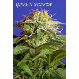 Green poison 100% sweet seeds
