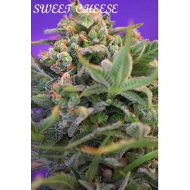 Sweet cheese 100% sweet seeds